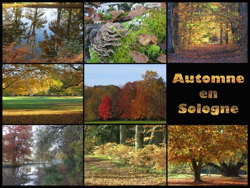 Automne en Sologne